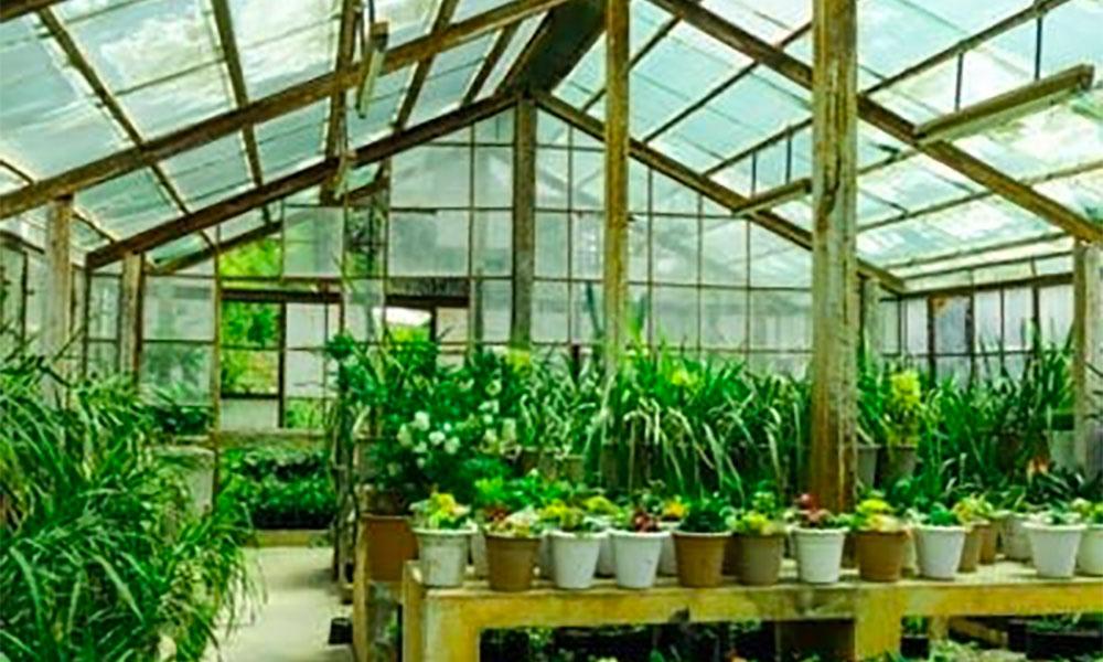 Inovasi Greenhouse Dengan atap Gelombang PET Membuat Tanaman Jadi Sehat